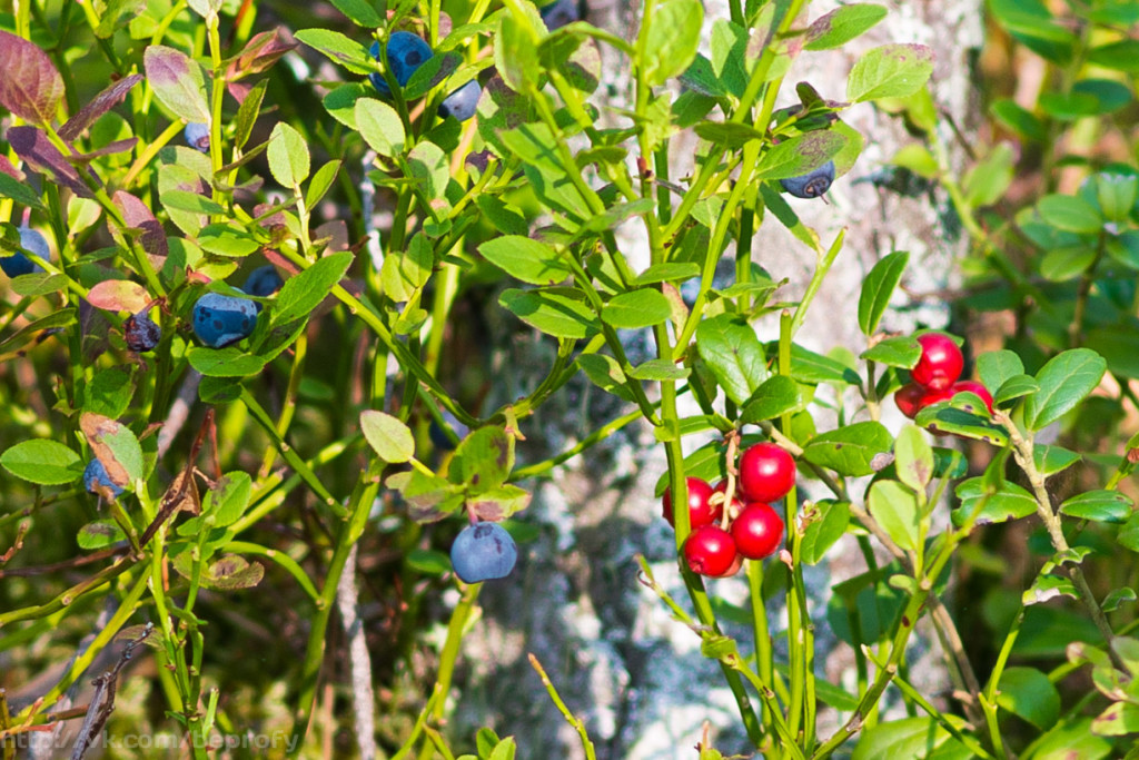 Site about berries