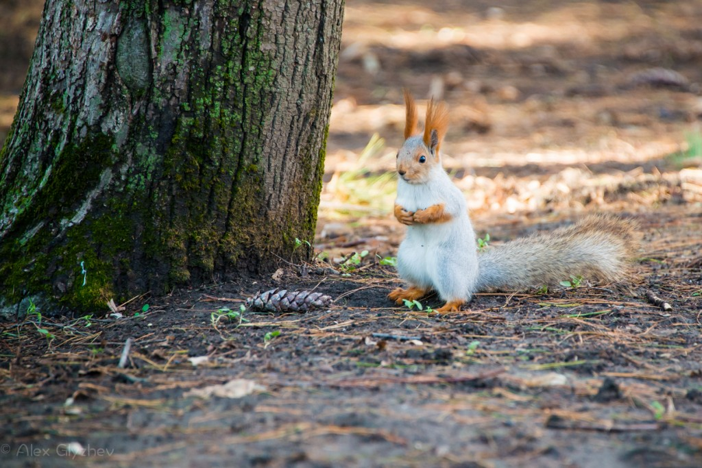 Squirrels in the forests